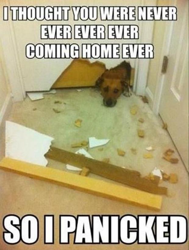 Pet Deposit Damage